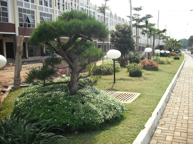 Tukang Taman di Tangerang Harga Termurah dan Bergaransi | Tamanpedia